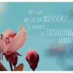 Blüte mit dem Sprüche Bild: Pass auf was du dir wünschst, es könnte in Erfüllung gehen.