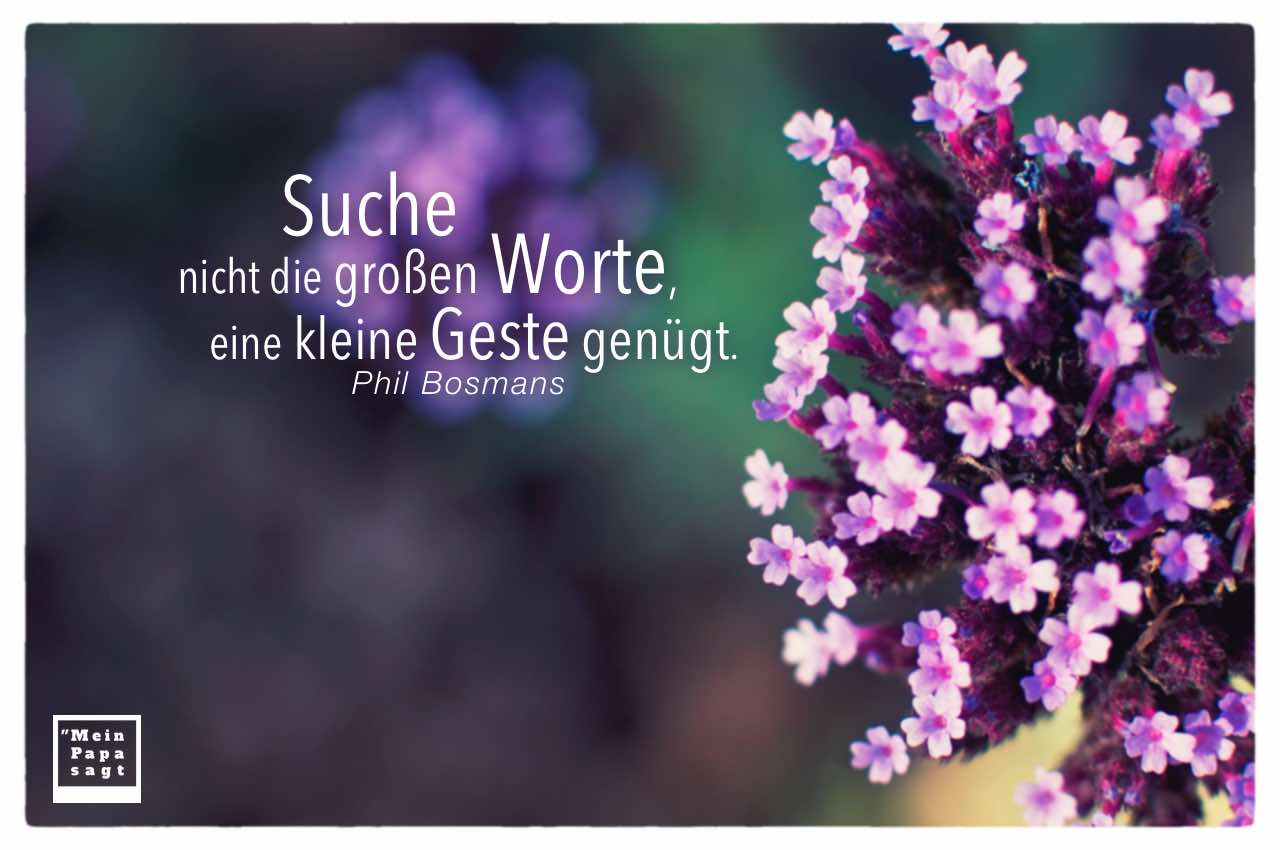 Kleine Blüten mit Bosmans Zitate in Bildern: Suche nicht die großen Worte, eine kleine Geste genügt. Phil Bosmans