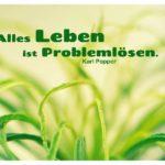 Gräser mit Popper Zitate Bild: Alles Leben ist Problemlösen. Karl Popper