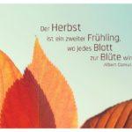 Herbstlaub mit Camus Zitate in Bildern: Der Herbst ist ein zweiter Frühling, wo jedes Blatt zur Blüte wird. Albert Camus