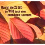 Herbstlaub mit dem Sprüche Bild: Man ist nie zu alt, um wild durch einen Laubhaufen zu rennen.