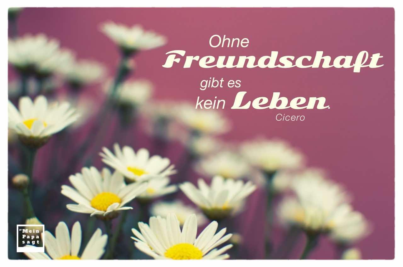 Margeriten mit Cicero Zitate Bilder: Ohne Freundschaft gibt es kein Leben. Cicero
