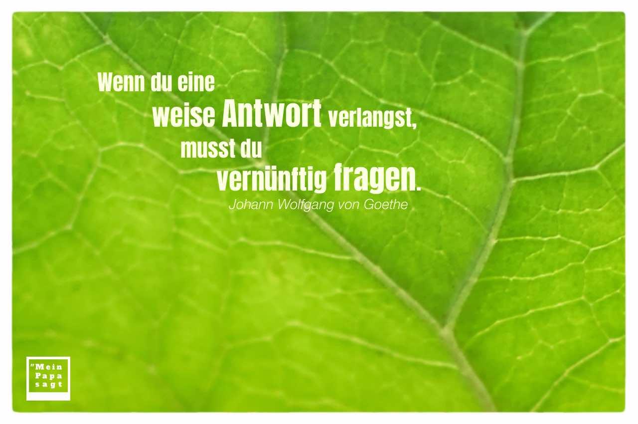Blatt Pflanze mit Goethe Zitate Bilder: Wenn du eine weise Antwort verlangst, musst du vernünftig fragen. Johann Wolfgang von Goethe