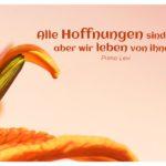 Lilie mit Levi Zitate Bild: Alle Hoffnungen sind naiv, aber wir leben von ihnen. Primo Levi