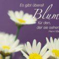 Beitragsbild - Es gibt überall Blumen, für den, der sie sehen will