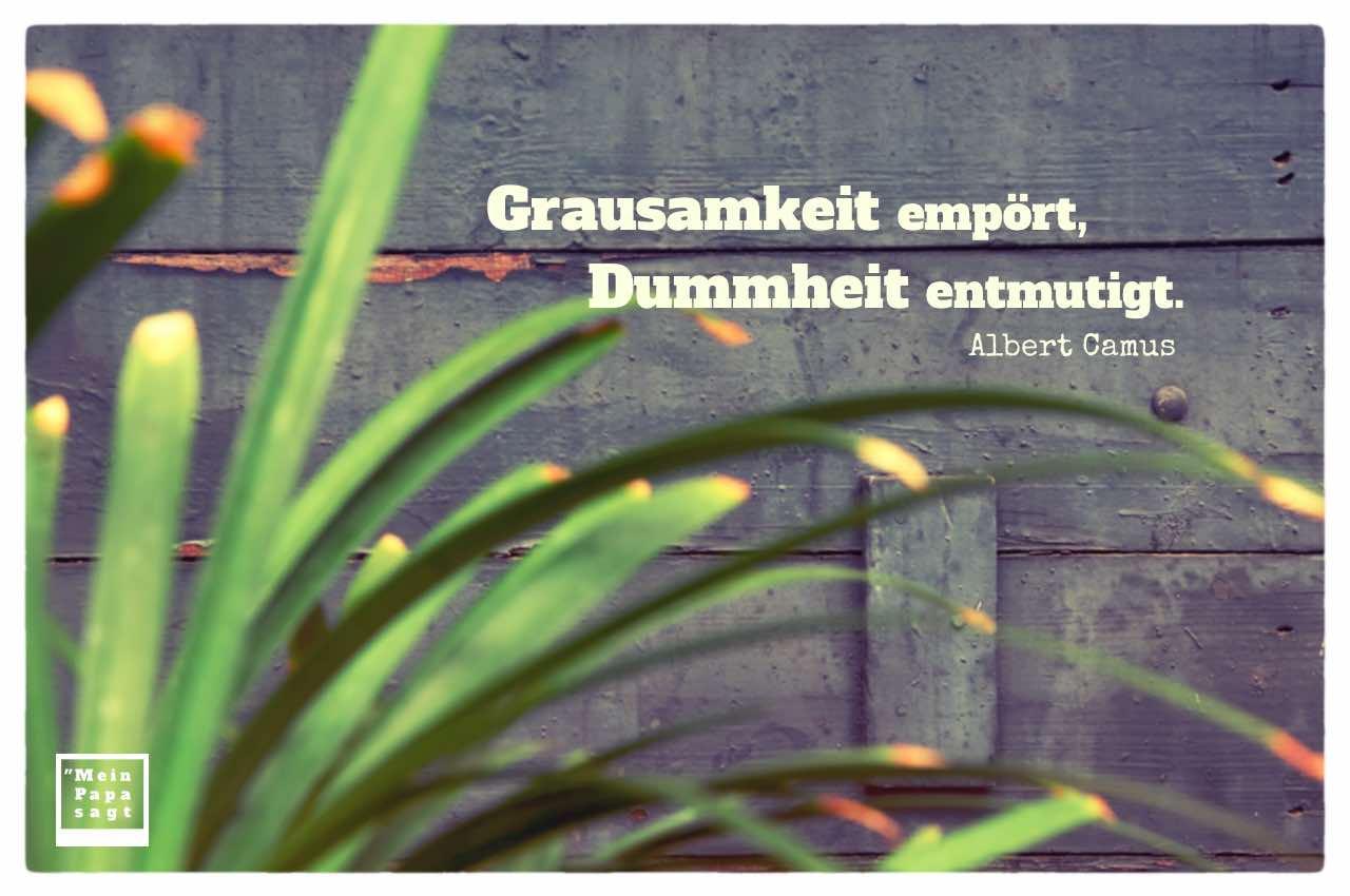 Holz und Pflanze mit Camus Zitate Bilder: Grausamkeit empört, Dummheit entmutigt. Albert Camus