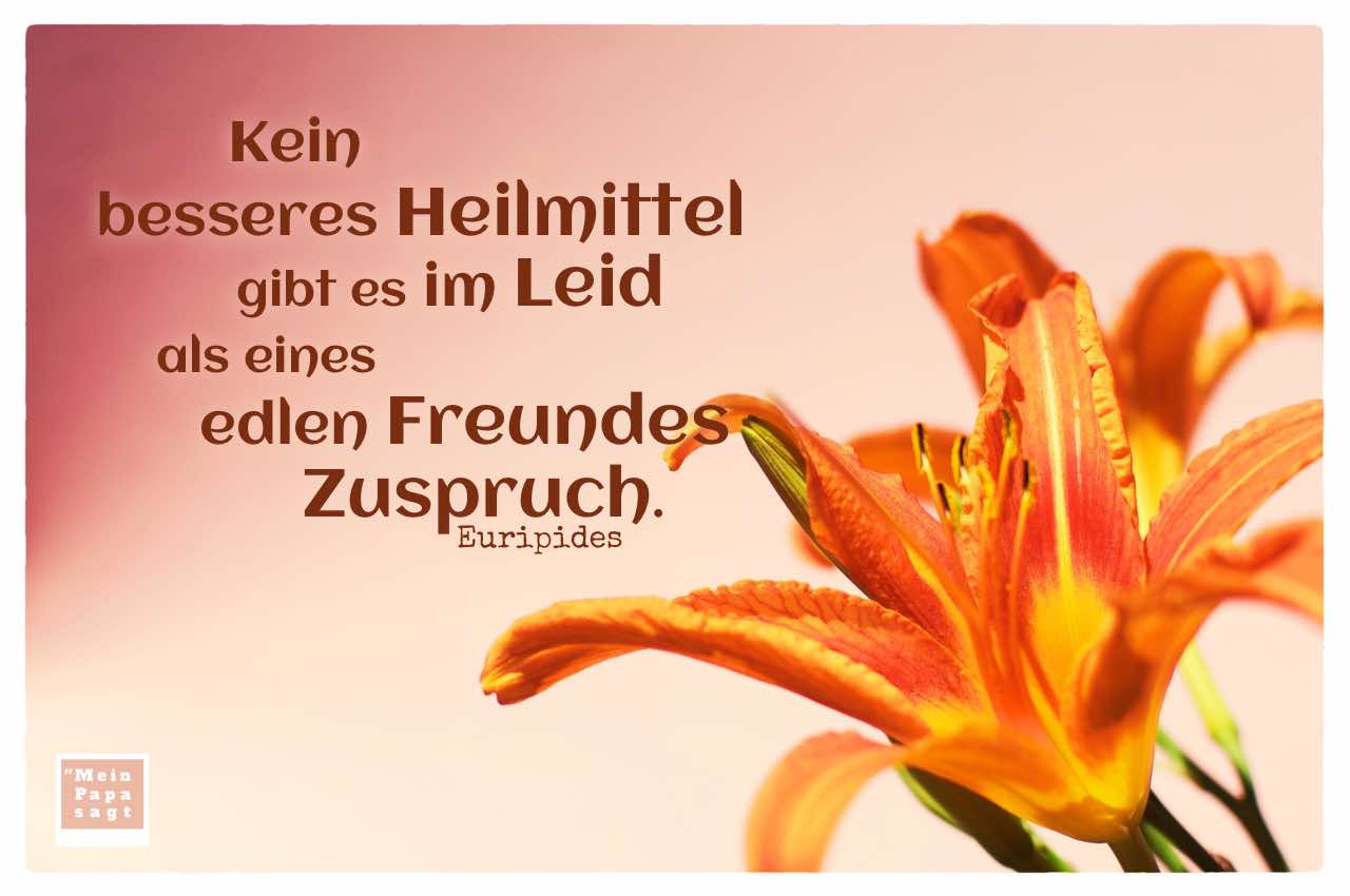 Lilie mit Euripides Zitate Bilder: Kein besseres Heilmittel gibt es im Leid als eines edlen Freundes Zuspruch. Euripides
