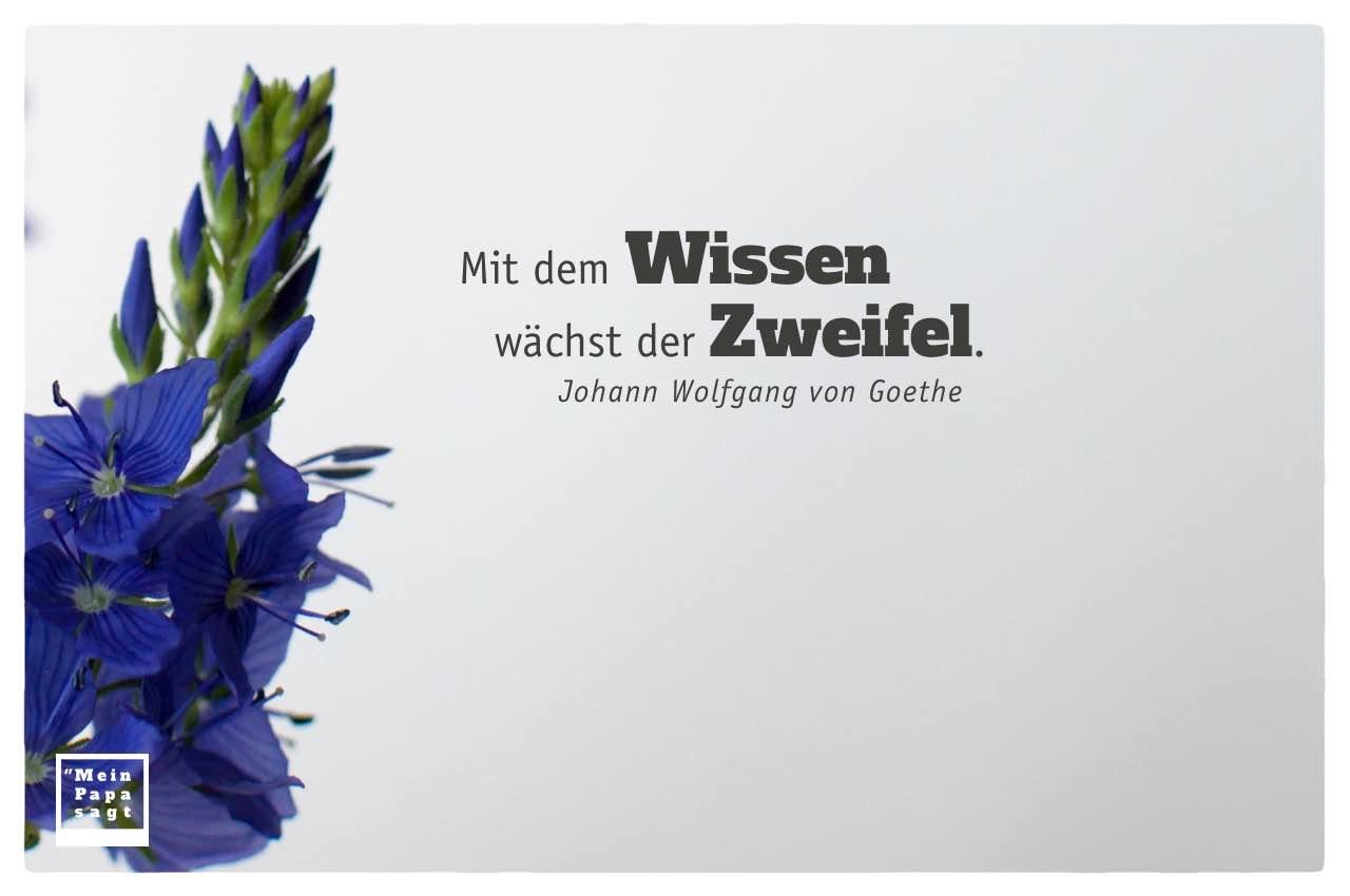 blaue Blüten mit Goethe Zitate Bildern: Mit dem Wissen wächst der Zweifel. Johann Wolfgang von Goethe