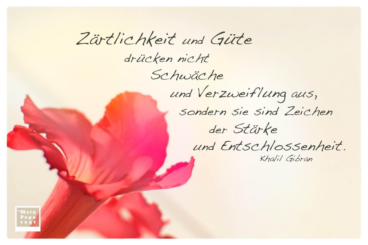 Blüte mit Gibran Zitate Bildern: Zärtlichkeit und Güte drücken nicht Schwäche und Verzweiflung aus, sondern sie sind Zeichen der Stärke und Entschlossenheit. Khalil Gibran