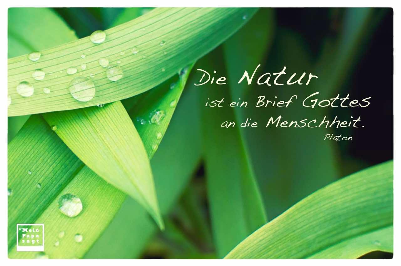 Schilf Blätter mit Platon Weisheiten Bilder: Die Natur ist ein Brief Gottes an die Menschheit. Platon