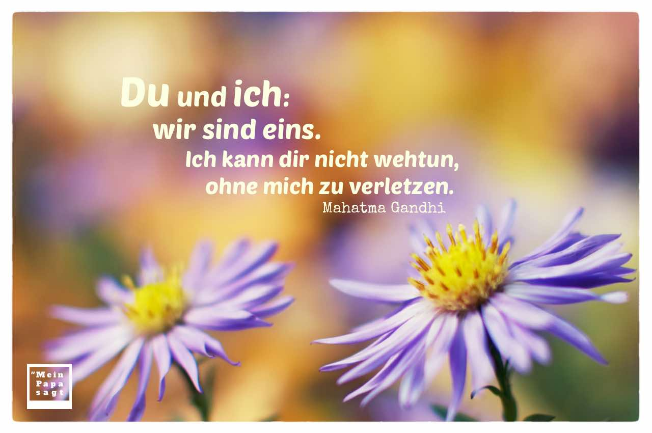 2 Blumen mit Gandhi Zitate Bilder: Du und ich: wir sind eins. Ich kann dir nicht wehtun, ohne mich zu verletzen. Mahatma Gandhi
