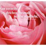Rosa Rose mit Rochefoucauld Lebensweisheiten in Bildern: Man verzeiht im gleichen Ausmaß in dem man liebt. François de La Rochefoucauld