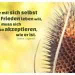 Dornige Pflanze mit Lagerlöf Zitate Bilder: Wer mit sich selbst in Frieden leben will, muss sich so akzeptieren, wie er ist. Selma Lagerlöf
