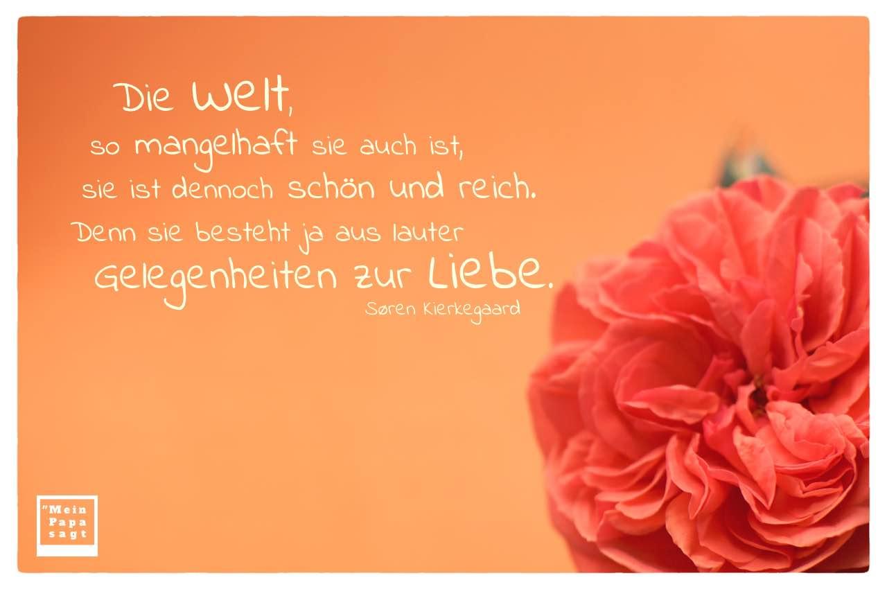 Blüte mit Kierkegaard Zitate Bilder: Die Welt, so mangelhaft sie auch ist, sie ist dennoch schön und reich. Denn sie besteht ja aus lauter Gelegenheiten zur Liebe. Søren Kierkegaard
