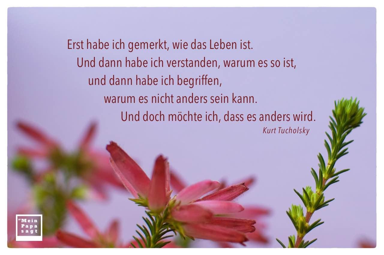 Blumen mit Tucholsky Zitate Bildern: Erst habe ich gemerkt, wie das Leben ist. Und dann habe ich verstanden, warum es so ist, und dann habe ich begriffen, warum es nicht anders sein kann. Und doch möchte ich, dass es anders wird. Kurt Tucholsky