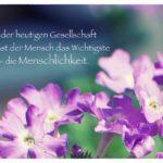 Blüten mit dem Spruch mit Bild: In der heutigen Gesellschaft vergisst der Mensch das Wichtigste - die Menschlichkeit.