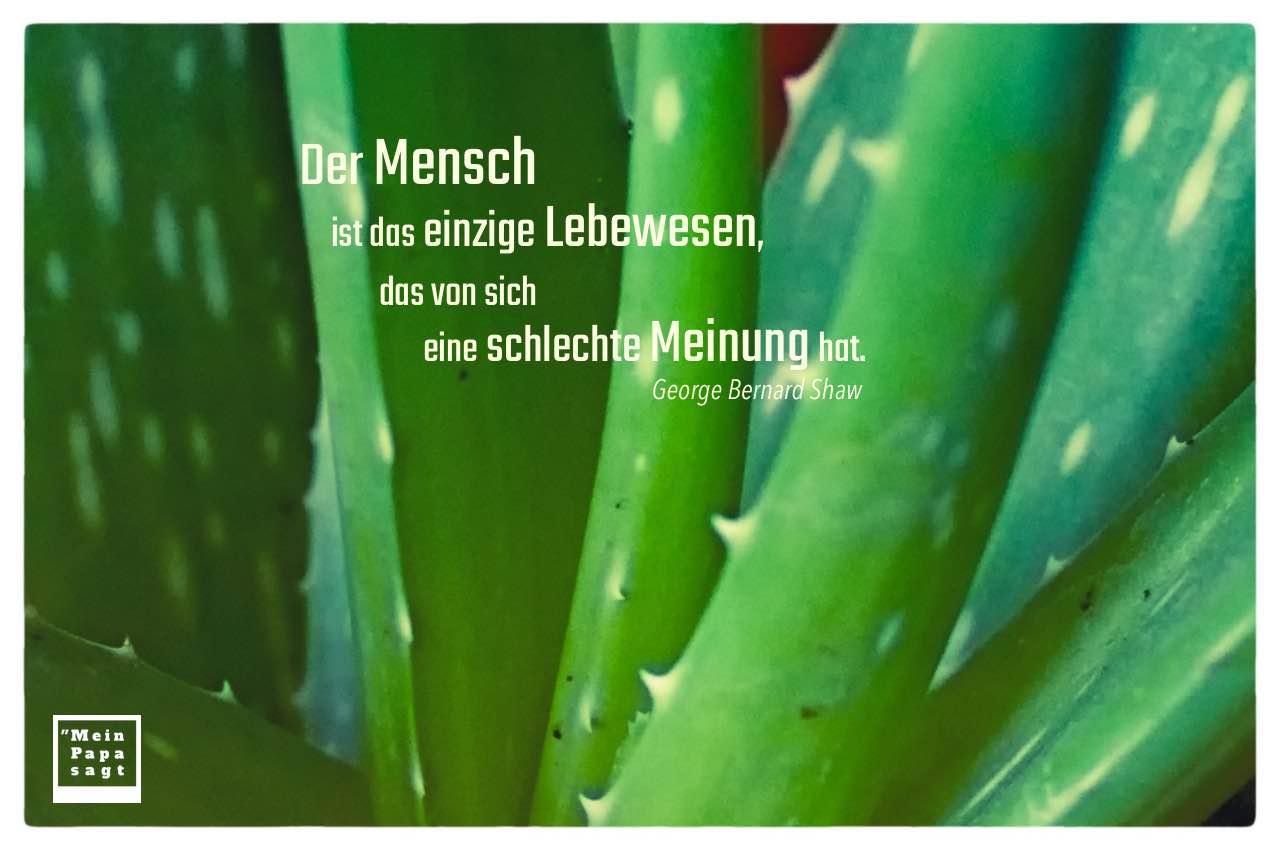 Echte Aloe mit Shaw Zitate Bilder: Der Mensch ist das einzige Lebewesen, das von sich eine schlechte Meinung hat. George Bernard Shaw