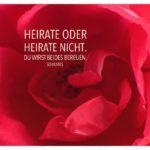 Blütenkelch mit Sokrates Zitate Bilder: Heirate oder heirate nicht. Du wirst beides bereuen. Sokrates