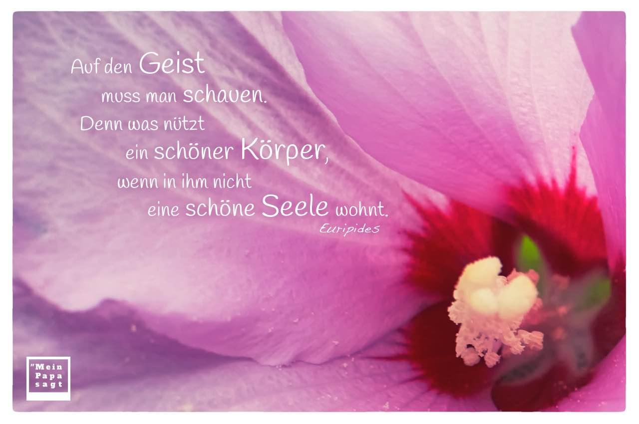 Blüte mit Stempel und Euripides Zitate Bilder: Auf den Geist muss man schauen. Denn was nützt ein schöner Körper, wenn in ihm nicht eine schöne Seele wohnt. Euripides
