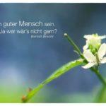 Kleine Blüten mit Brecht Zitate Bilder: Ein guter Mensch sein. Ja wer wär´s nicht gern? Bertolt Brecht