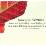 Herbstblatt mit Schopenhauer Zitate Bilder: Natürlicher Verstand kann fast jeden Grad von Bildung ersetzen, aber keine Bildung den natürlichen Verstand. Arthur Schopenhauer