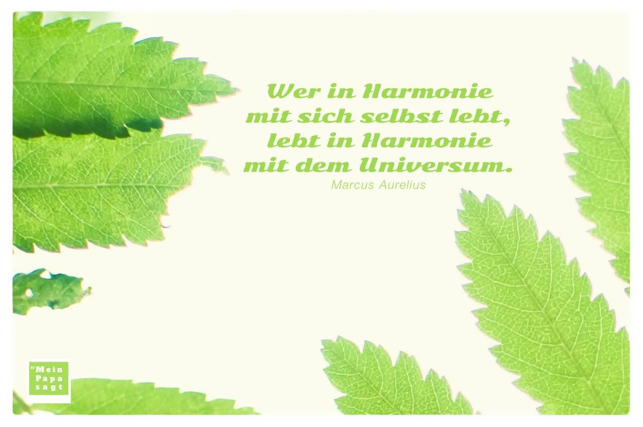 Blätter mit Aurelius Zitate Bilder: Wer in Harmonie mit sich selbst lebt, lebt in Harmonie mit dem Universum. Marcus Aurelius