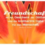 Blüte Lilie mit Disraeli Zitate Bilder: Freundschaft ist ein Geschenk der Götter und die kostbarste Gabe für den Menschen. Benjamin Disraeli