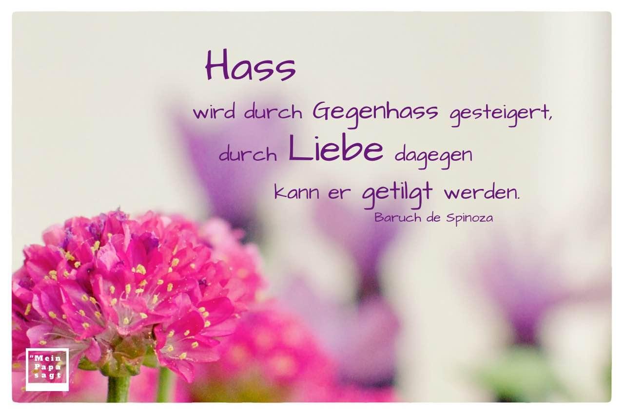 Blumen mit Spinoza Zitate Bilder: Hass wird durch Gegenhass gesteigert, durch Liebe dagegen kann er getilgt werden. Baruch de Spinoza
