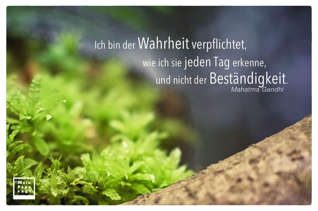 Grüne Pflanzen mit Gandhi Zitate Bilder: Ich bin der Wahrheit verpflichtet, wie ich sie jeden Tag erkenne, und nicht der Beständigkeit. Mahatma Gandhi