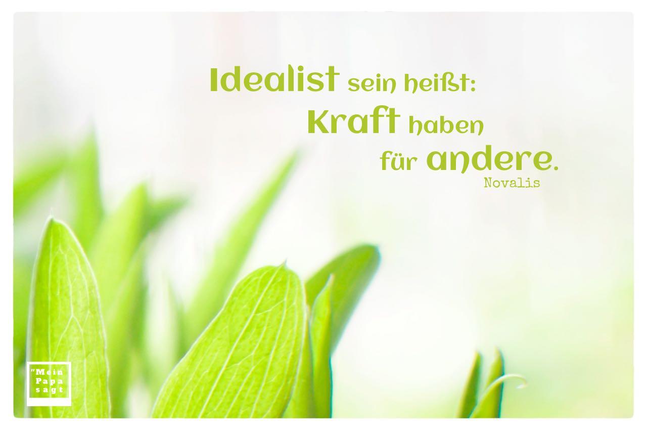Grüne Blätter mit Novalis Zitate Bilder: Idealist sein heißt: Kraft haben für andere. Novalis