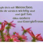 Heide-Gräser mit Sprüche Bilder: Umgib Dich mit Menschen, die dir wirklich wichtig sind und gut tun. Alles andere sind Energiefresser.