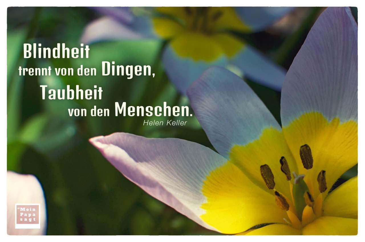 Blumen mit Keller Zitate Bilder: Blindheit trennt von den Dingen, Taubheit von den Menschen. Helen Keller