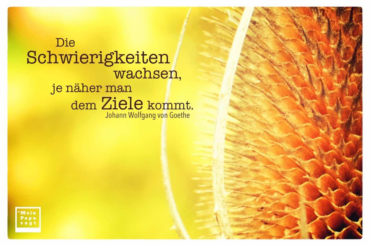 Pflanze mit Goethe Zitate Bilder: Die Schwierigkeiten wachsen, je näher man dem Ziele kommt. Johann Wolfgang von Goethe