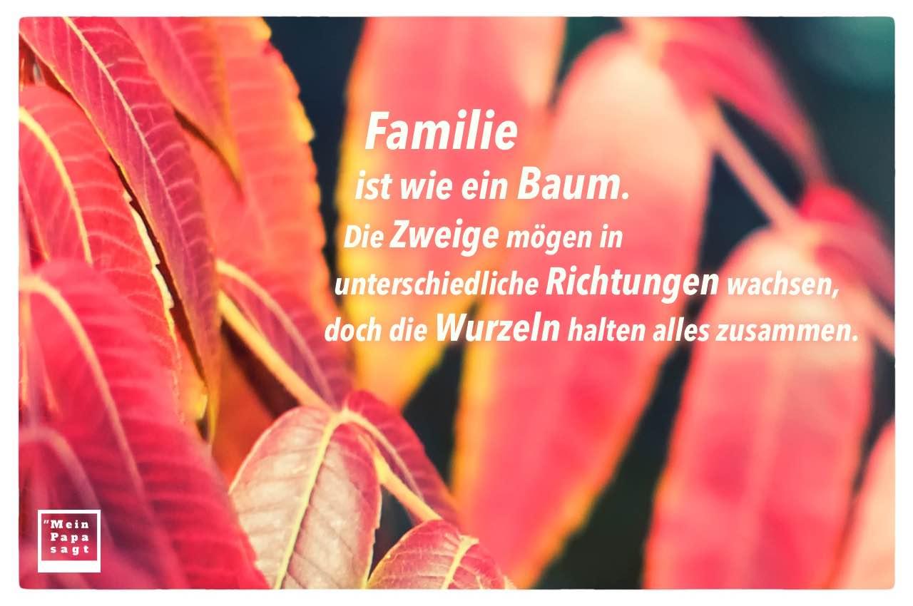 Baum Blätter mit Sprüche Bilder: Familie ist wie ein Baum. Die Zweige mögen in unterschiedliche Richtungen wachsen, doch die Wurzeln halten alles zusammen.