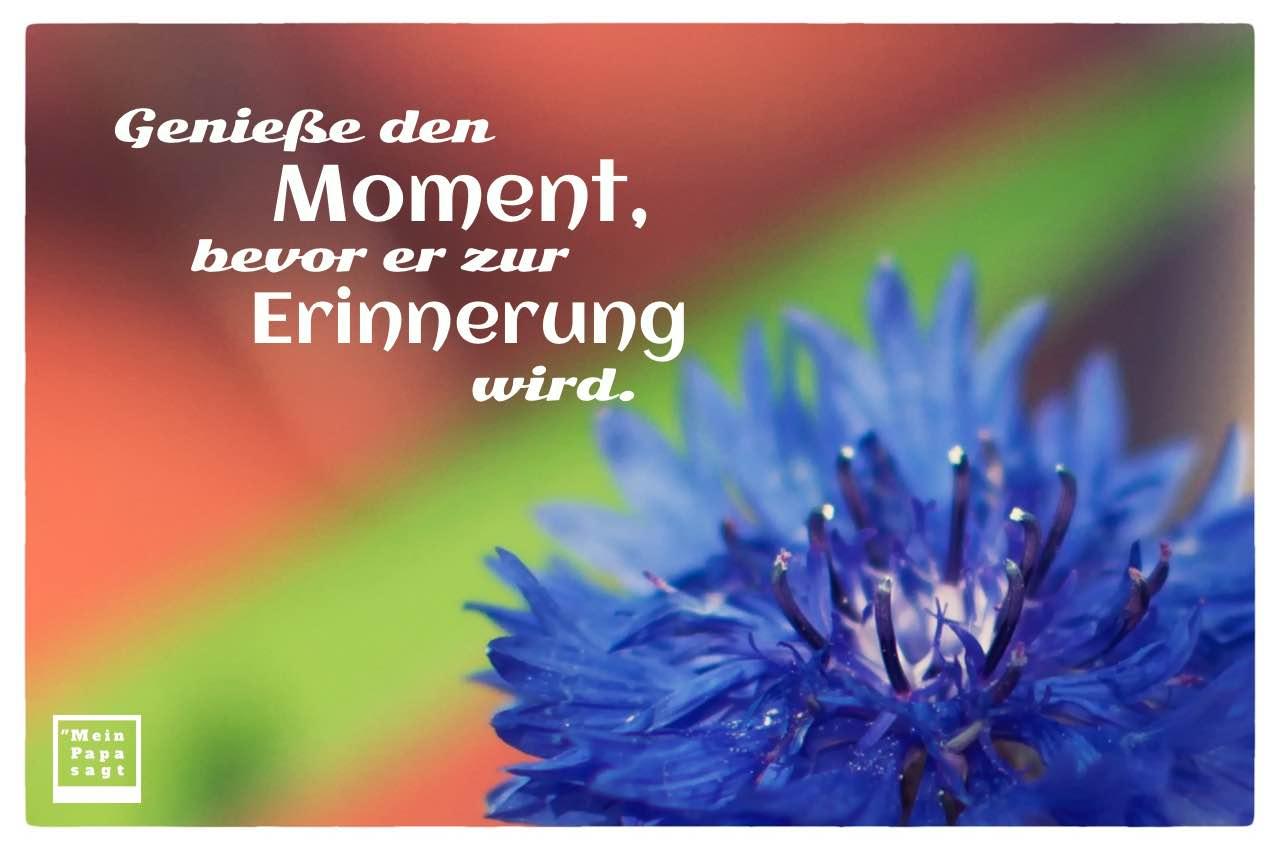 Kornblume mit Sprüche Bilder: Genieße den Moment, bevor er zur Erinnerung wird.