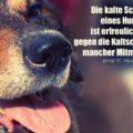 Die kalte Schnauze eines Hundes ist erfreulich warm gegen die Kaltschnäuzigkeit mancher Mitmenschen