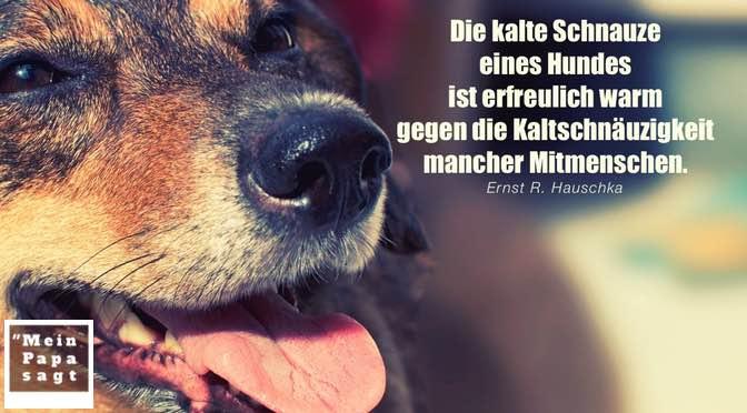 Beitragsbild - Die kalte Schnauze eines Hundes ist erfreulich warm gegen die Kaltschnäuzigkeit mancher Mitmenschen