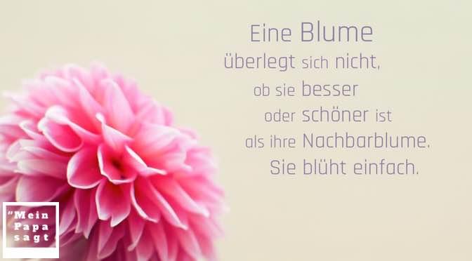 Eine Blume überlegt sich nicht, ob sie besser oder schöner ist als ihre Nachbarblume. Sie blüht einfach