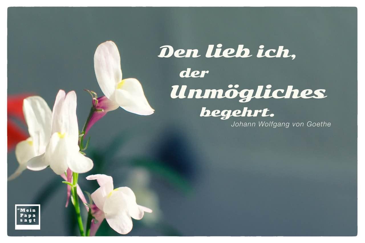 Weiße Blüte mit Goethe Zitate Bilder: Den lieb ich, der Unmögliches begehrt. Johann Wolfgang von Goethe
