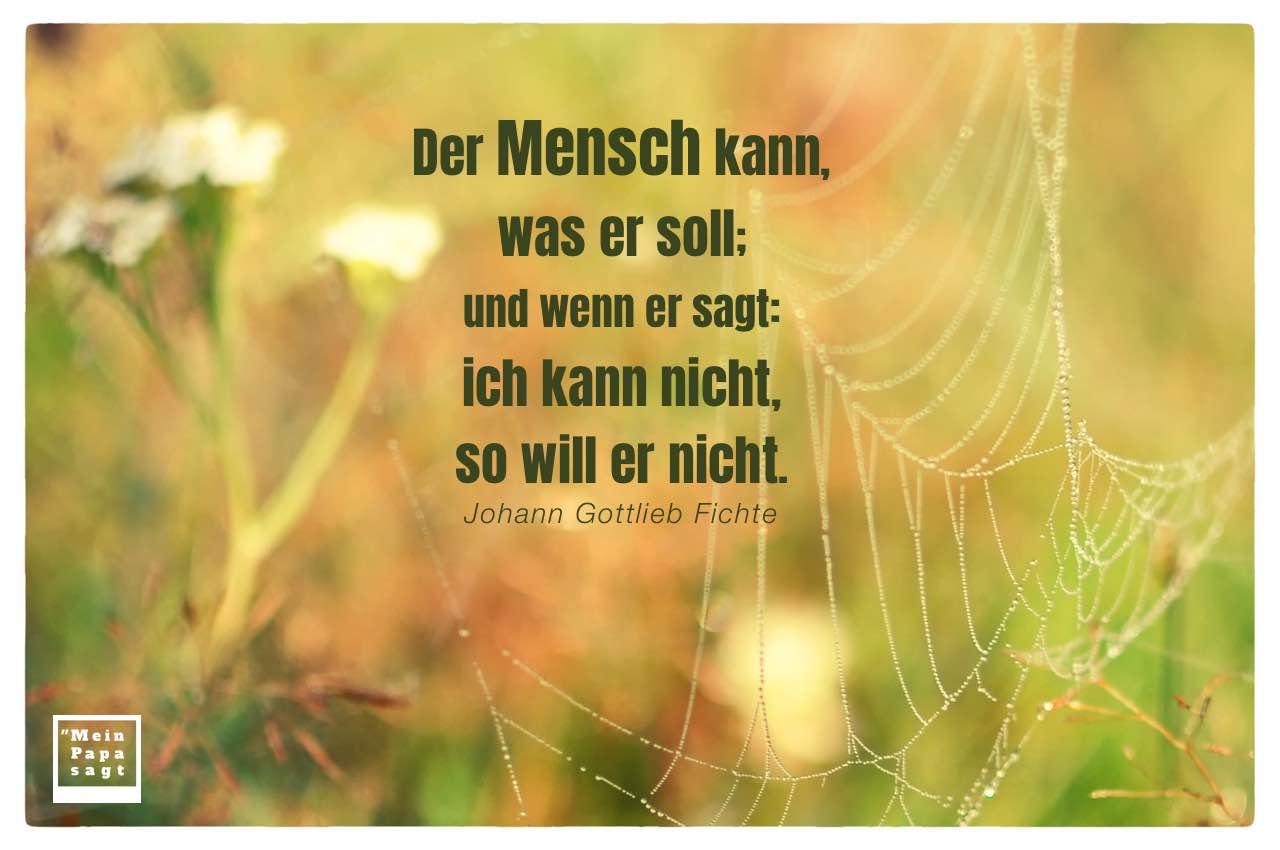 Spinnennetz mit Morgentau und Blumen und Fichte Zitate Bilder: Der Mensch kann, was er soll; und wenn er sagt: ich kann nicht, so will er nicht. Johann Gottlieb Fichte
