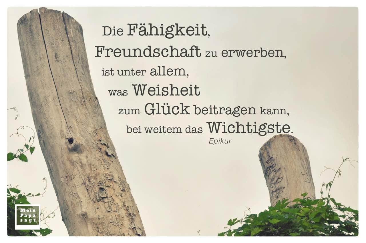 2 tote Baumstämme mit Epikur Zitate Bilder: Die Fähigkeit, Freundschaft zu erwerben, ist unter allem, was Weisheit zum Glück beitragen kann, bei weitem das Wichtigste. Epikur