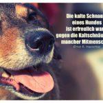 Hund mit Hauschka Zitate Bilder: Die kalte Schnauze eines Hundes ist erfreulich warm gegen die Kaltschnäuzigkeit mancher Mitmenschen. Ernst R. Hauschka