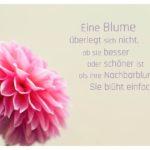 Schmuck-Dahlie mit Sprüche Bilder: Eine Blume überlegt sich nicht, ob sie besser oder schöner ist als ihre Nachbarblume. Sie blüht einfach.