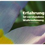 Blütenblätter mit Kant Zitate Bilder: Erfahrung ist verstandene Wahrnehmung. Immanuel Kant