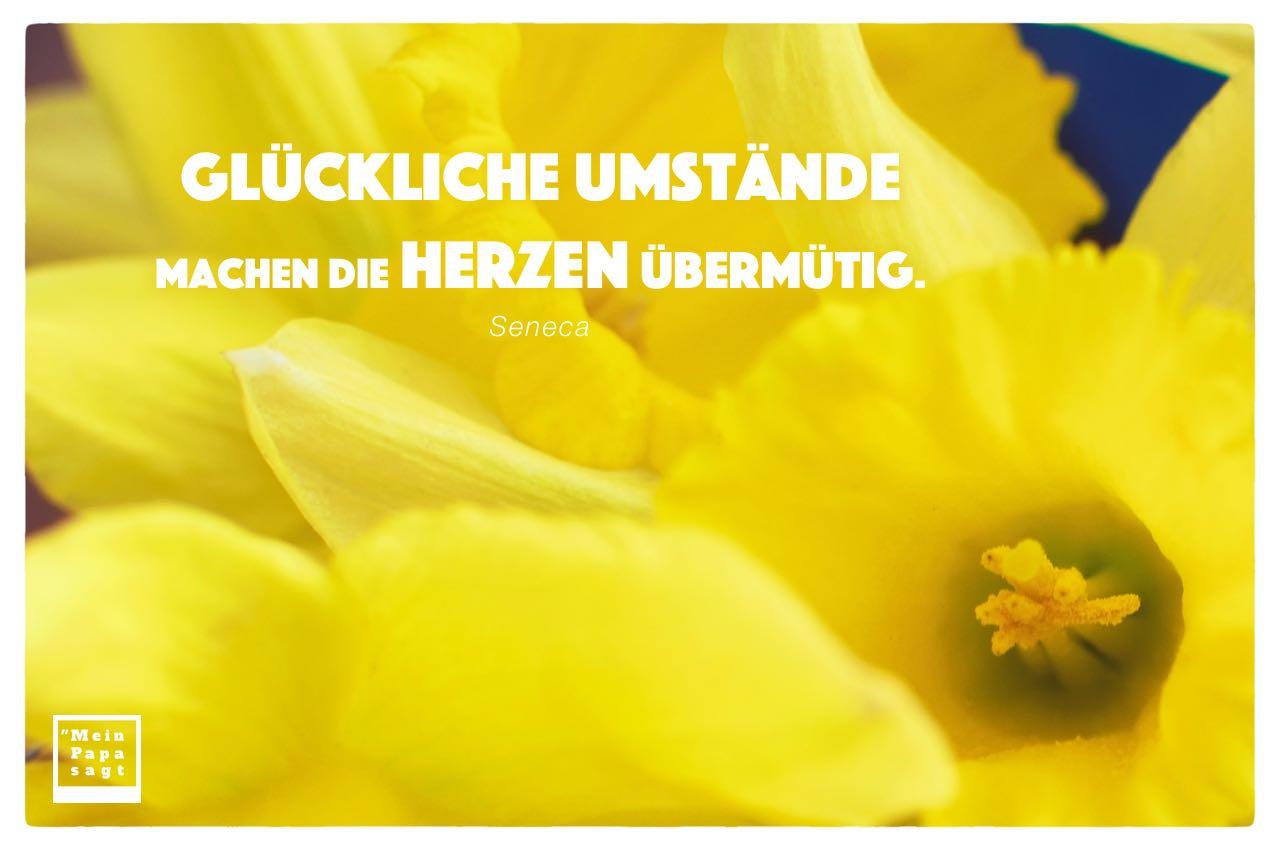 Blüten mit Seneca Zitate Bilder: Glückliche Umstände machen die Herzen übermütig. Seneca