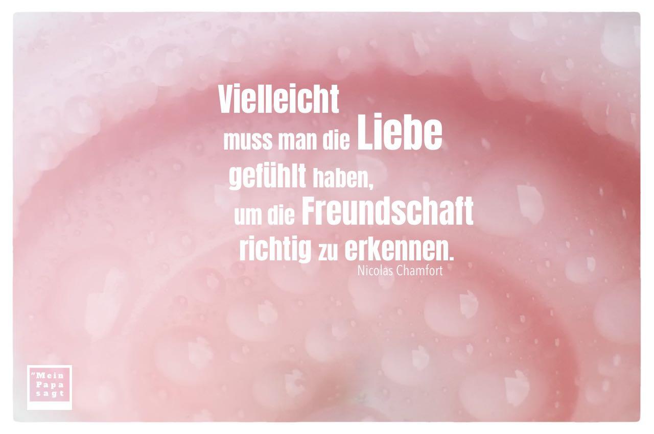 Wassertropfen auf einer Kerze mit Chamfort Zitate Bilder: Vielleicht muss man die Liebe gefühlt haben, um die Freundschaft richtig zu erkennen. Nicolas Chamfort