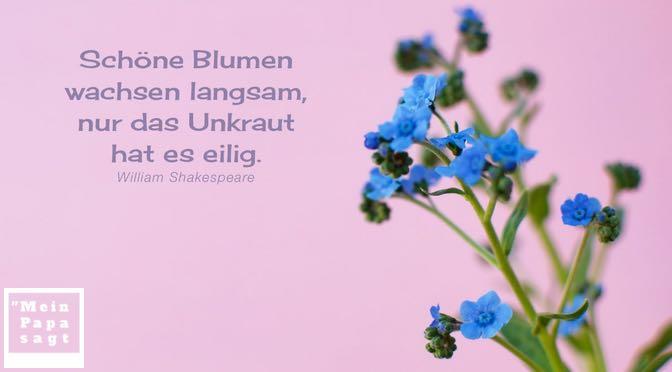 Schöne Blumen wachsen langsam, nur das Unkraut hat es eilig – William Shakespeare