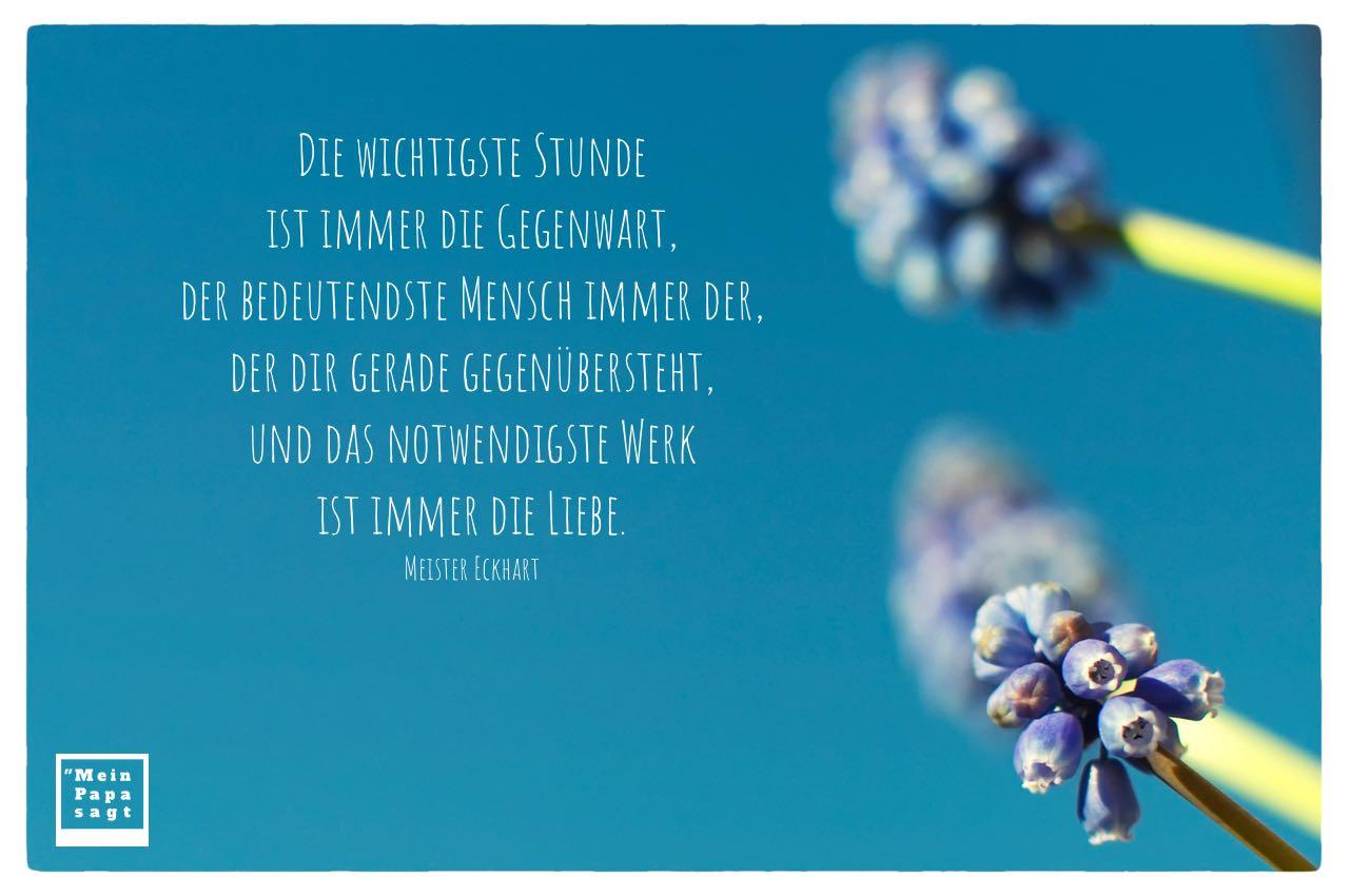 Blütenköpfe mit Meister Eckhart Zitate Bilder: Die wichtigste Stunde ist immer die Gegenwart, der bedeutendste Mensch immer der, der dir gerade gegenübersteht, und das notwendigste Werk ist immer die Liebe. Meister Eckhart