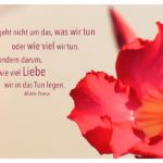 Rote Blüte mit Mutter Teresa Zitate Bilder: Es geht nicht um das, was wir tun oder wie viel wir tun. Sondern darum, wie viel Liebe wir in das Tun legen. Mutter Teresa