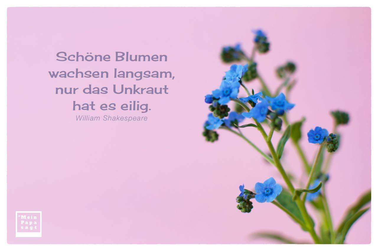 Kleine Blüten mit Shakespeare Zitate Bilder: Schöne Blumen wachsen langsam, nur das Unkraut hat es eilig. William Shakespeare